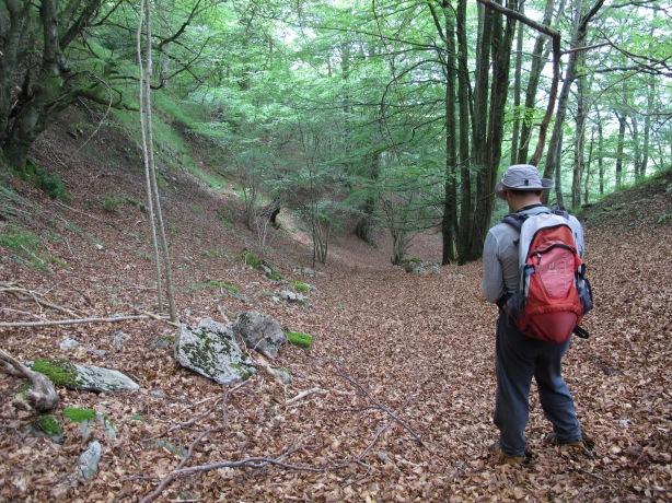 Encontramos lo que parece un antiguo camino tapado por la hojarasca.